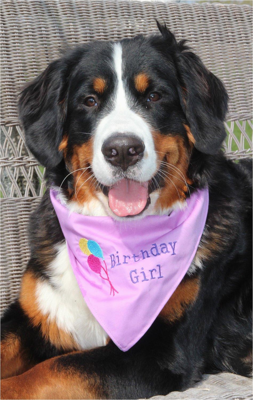 girl birthday dog bandana in tie style