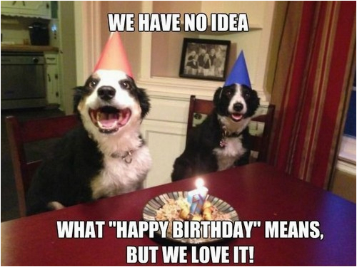 happy birthday memes dog