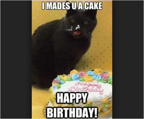 Black Cat Birthday Meme 45 Cat Birthday Memes Wishesgreeting