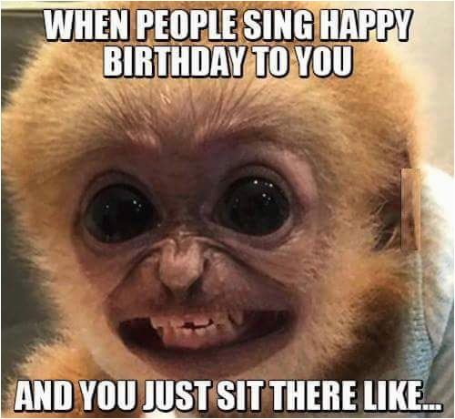 Clean Funny Birthday Memes You Look Like A Monkey Birthday Humor Humor Jokes