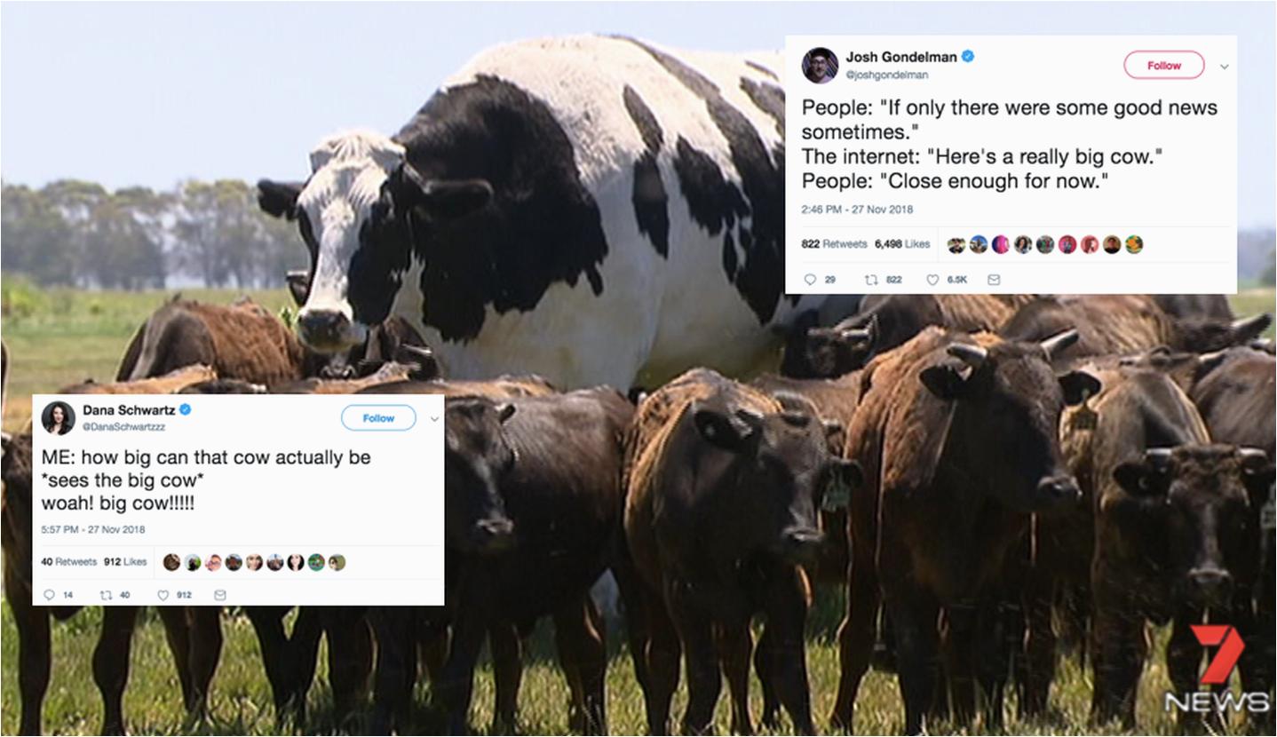 cow funny birthday memes f5