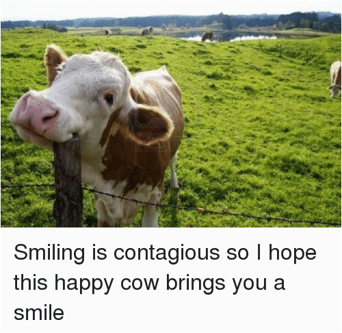 smiling is contagious so i hope this happy cow brings 706615