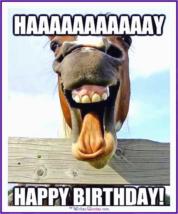 Cute Animal Happy Birthday Meme Happy Birthday Memes with Funny Cats Dogs and Cute Animals