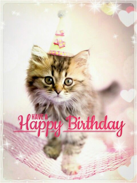 best happy birthday cat meme
