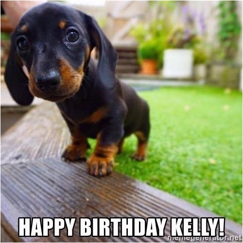 Dachshund Happy Birthday Meme Happy Birthday Kelly