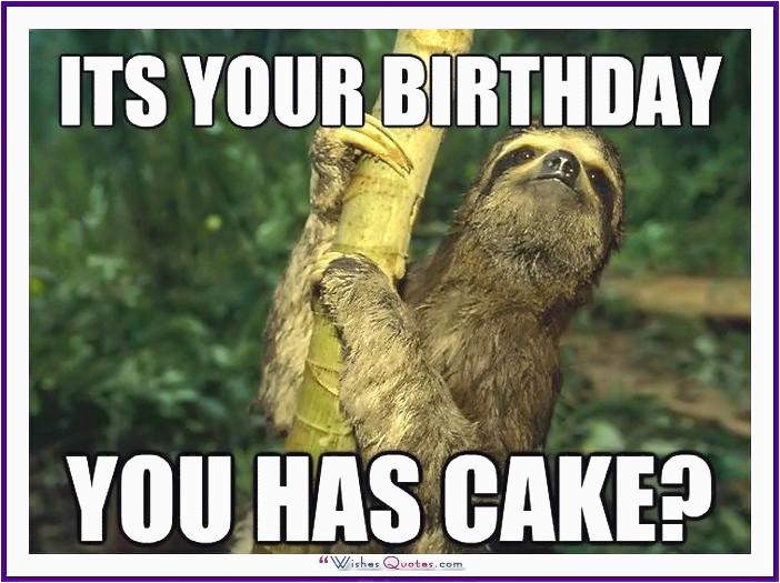 happy birthday memes cats dogs animals