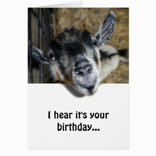 nosy goat looking up birthday greeting card 137320993458011870