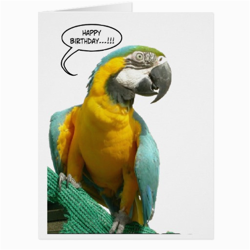 funny talking parrot birthday big greeting card 137590265742266854
