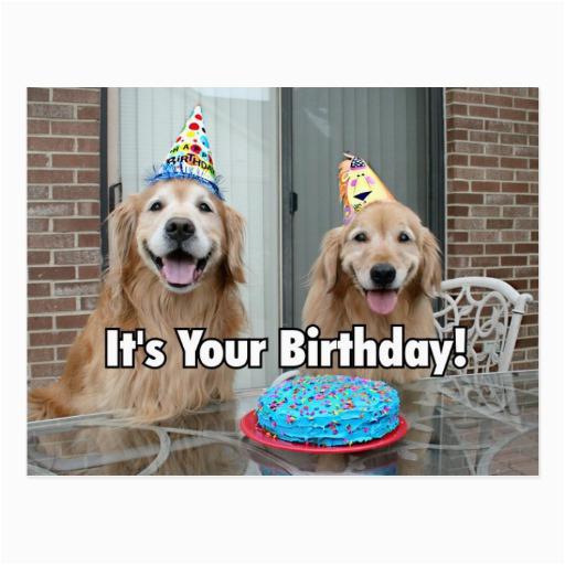 golden retriever happy birthday cake postcard 239383624756714753