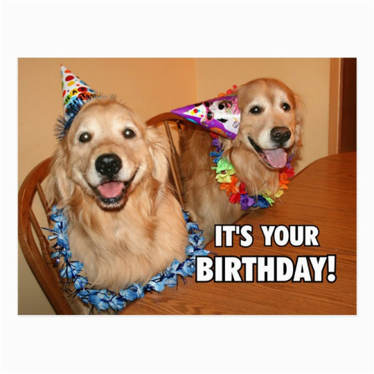 golden retriever lets party birthday postcard 239340141050038392