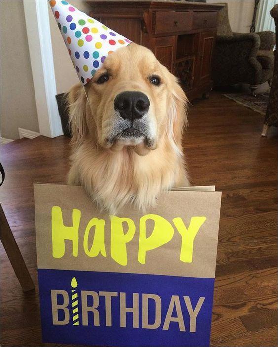 Golden Retriever Birthday Meme Louie Happy Birthday Meme Happy Birthday Golden