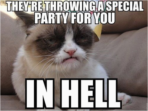 o grumpy cat