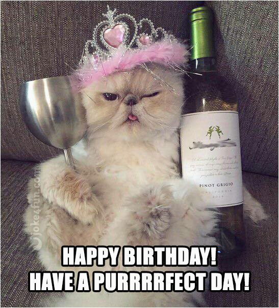 Happy Birthday Memes with Cats 20 Cat Birthday Memes that are Way too Adorable