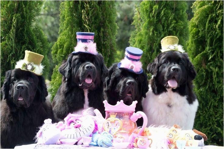 Newfie Birthday Meme 382 Best H B Images On Pinterest Birthdays Birthday