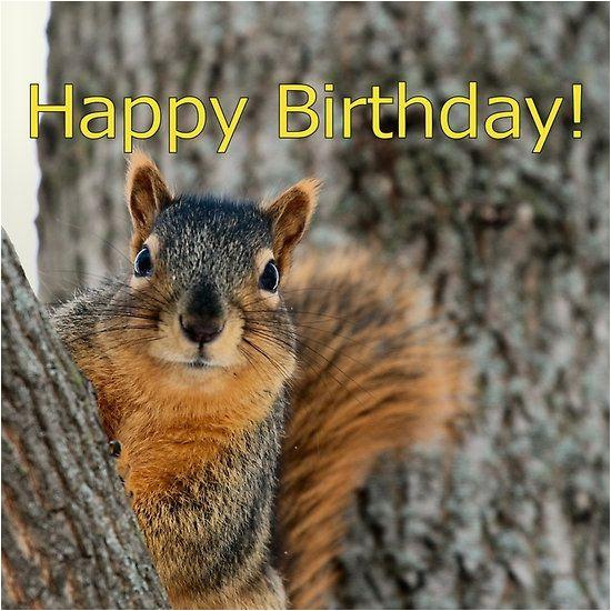 Squirrel Happy Birthday Meme Happy Birthday Squirrel Wishes Animals Pinterest