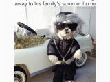 16th Birthday Meme Funny Birthday Memes Of 2016 On Sizzle Happy