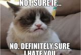 19th Birthday Meme 164 Best Images About Grumpy Cat On Pinterest Cats