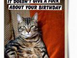 26 Birthday Meme Best 26 Cat Birthday Meme 10 so Peachy