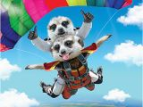3d Holographic Birthday Cards 3d Holographic Birthday Card Skydiving Meerkats Funny