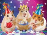 3d Holographic Birthday Cards 3d Holographic Hamster Disco Birthday Card Cards Love