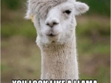 Alpaca Birthday Meme 25 Best Memes About Happy Alpaca Happy Alpaca Memes