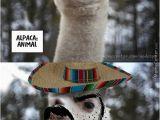 Alpaca Birthday Meme Alpaca Memes Best Collection Of Funny Alpaca Pictures