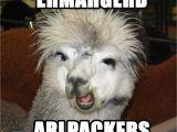 Alpaca Birthday Meme Alpaca Memes Google Search Alpacas Alpaca Funny