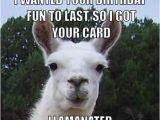 Alpaca Birthday Meme Happy Birthday Funny Llama Google Search Llama
