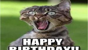 Angry Cat Birthday Meme Best Happy Birthday Cat Meme