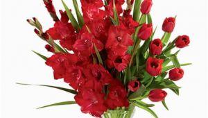 August Birthday Flowers Birthday Flower for August Gladiolus