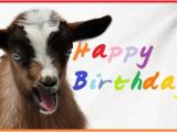Baby Goat Birthday Card Happy Birthday Wishes with Goats Page 2