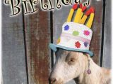Baby Goat Birthday Card socalmountains Com Printer Friendly
