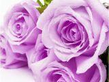 Best Birthday Flowers for Girlfriend Flowers for Girlfriend Birthday Flowers and Gifts Shop