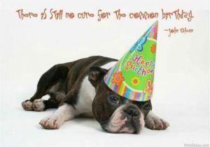 Birthday Card for A Dog 64 Dog Birthday Wishes