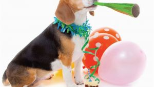 Birthday Card for A Dog Quality Blank Happy Birthday Card Party Beagle Dog with