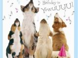 Birthday Card with Dogs Best 25 Happy Birthday Wishes Ideas On Pinterest Happy
