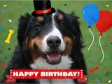 Birthday Card with Dogs Dog and Cat Cards Dog Birthday Card Card From Dog Pet