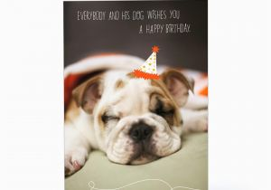 Birthday Card With Dogs Sleepy Dog Greeting 1pgc7155 1470 1 Jpg
