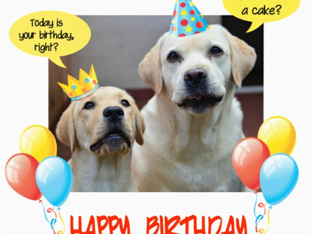Birthday Cards For Pets Happy Dog Party Free Ecards