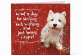 Birthday Cards From the Dog Smiling Happy Dog Birthday Cards Hallmark Card Pictures