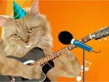 Birthday Cards with Cats Singing Cute Cats Singing Happy Birthday with Ukulele Youtube Cat