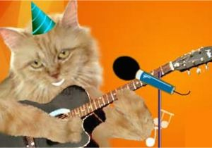 Birthday Cards With Cats Singing Cute Happy Ukulele Youtube Cat