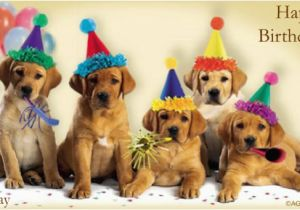 Birthday Cards With Dogs On Them 18 Funny Jpg Psd Ai Illustrator Download