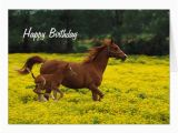 Birthday Cards with Horses On them Horse and Pony Happy Birthday Greeting Card Zazzle