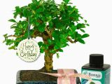 Birthday Gift Ideas for Her Uk Unusual Birthday Gift for Her Baby Bonsai Gift