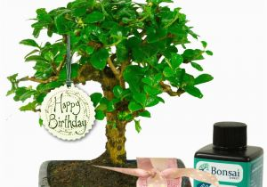 Birthday Gift Ideas For Her Uk Unusual Baby Bonsai