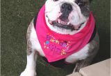 Birthday Girl Dog Bandana Barkday Girl or Barkday Boy Dog Bandana for Dog Birthday Party
