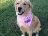 Birthday Girl Dog Bandana Birthday Girl or Birthday Boy Dog Bandana with Applique