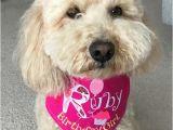 Birthday Girl Dog Bandana Birthday Girl Tie On Dog Bandana Party Hat Initial