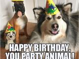 Birthday Meme with Dogs 25 Best Ideas About Happy Birthday Dog Meme On Pinterest